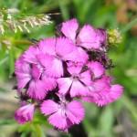 floare 4
