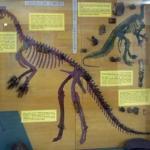 204-cornet-lentila-cu-dinozauri-18408731
