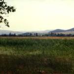 Rezervatia-Naturala-Cotul-Turzunului-20110114171823