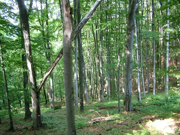 Rezervatia-Naturala-Padurea-de-fag-de-la-Archisel-20120619112456