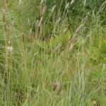 Rezervatia-Naturala-Solurile-saraturate-de-la-Socodor-20110407095155