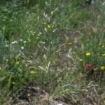 Rezervatia-Naturala-Solurile-saraturate-de-la-Socodor-20110407095234