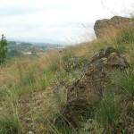 Rezervatia-naturala-Baltele-Gurahont-20110623153921