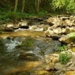 Rezervatia-naturala-Bucias-20110624144039