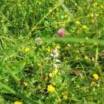 Rezervatia-naturala-Magura-cu-ghimpi-de-la-Patars-20110407101944