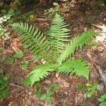 Rezervatia-naturala-Magura-cu-ghimpi-de-la-Patars-20110407102017