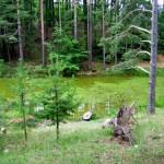 Rezervatia-naturala-Padurea-Lacurile-20120612114720