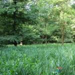 mlastina-eutrofa-verde