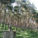 parcul-pini-2
