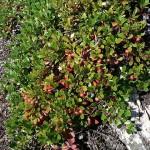 rezervatia-naturala-scarita-belioara-_5075d475b09a6
