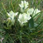 rezervatia-naturala-scarita-belioara-_5075d48ae1eea