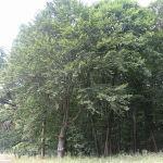 800px-Rezervaţia_Pădurea_Pietrosu8