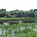 Parcul-Natural-Lunca-Joasa-a-Prutului-Inferior-20110121125116