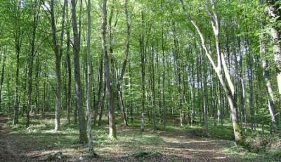 Rezervatia-Naturala-Padurea-Bejan-20101215143046