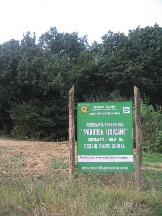 Rezervatia-Naturala-Padurea-Uricani-20110104123318
