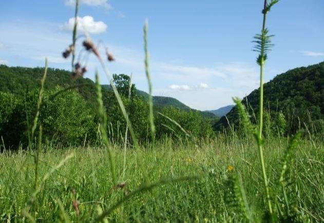 Rezervatia-Valea-Oglanicului-20110816172806