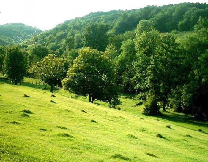Rezervatia-naturala-Cotul-cu-Aluni-20120625141556