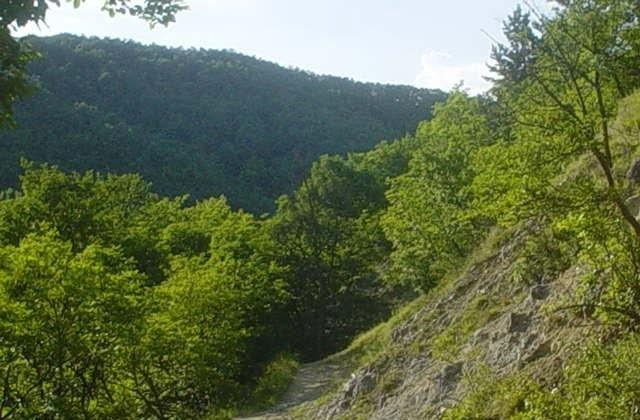 Rezervatia-naturala-Izvoarele-minerale-Sacelu-20110207114430