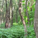 Rezervatia-naturala-Ostrovul-Ciocanesti-20101126142733
