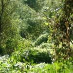 Rezervatia-naturala-Ostrovul-Soimul-20101126150706