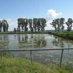 cristina_munteanu_10_05_24_ciocanesti_fish_ponds_birds_protections_367462
