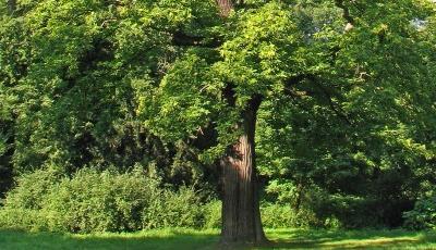Rezervatia-Naturala-Padurea-La-castani-20110128125807