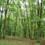 Rezervatia-Naturala-Padurea-Lapis-20110128122551