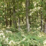 Rezervatia-naturala-Padurea-Topana-20101203115614