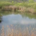 Lacul-Zagra-sau-Taul-lui-Alac-20110504103532