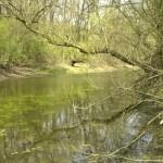 Parcul-Natural-Lunca-Muresului-20101108143348