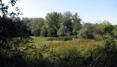 Rezervatia-Naturala-Padurea-Cenad-20110216172017