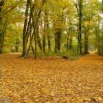 Rezervatia-Naturala-arboretumul-Bazos-20110217093436