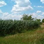 Rezervatia-naturala-Mlastina-Vermes-20120626144622