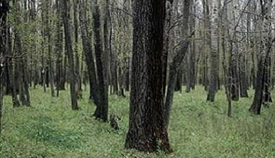 Rezervatia-naturala-Padurea-Balteni-20110905110638