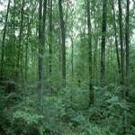 Rezervatia-naturala-Padurea-Harboanca-20110905110339