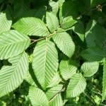 Rezervatia-naturala-Padurea-Runc-20120626142230