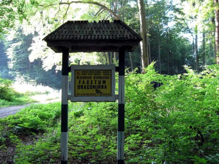 Rezervatia-naturala-Padurea-de-fagi-de-la-Dragomirna-20110204173021