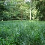 Rezervatia-naturala-Padurea-de-frasini-Urziceni-20120626145052