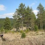 Rezervatia-naturala-Tinovul-Gaina-Lucina-20110204173830