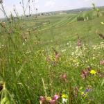 mars-ecologist-pentru-protectia-fanetelor-sucevene-de-la-ponoare-si-frumoasa-2053