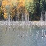 07-lacul-cuejdel