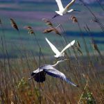 Drumetii-de-weekend--Rezervatia-naturala-Lacul-Vlascuta