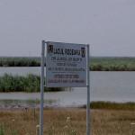 Lacul-Rodeanu-(Glodeanu)-20110208213058