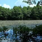 Lacul_Morarenilor3