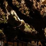 Pestera-Dambovicioara-20110128135305