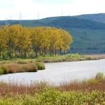 rezervatia-naturala-lacul-stiucii-2