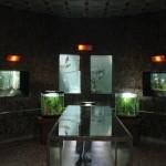 Muzeul-apelor-Mihai-Bacescu-din-Falticeni-20110222152309