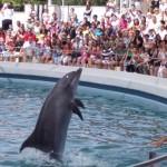 delfini-1316971265