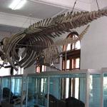 muzeu-istorie-antipa2