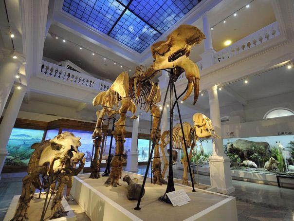 muzeul-antipa02